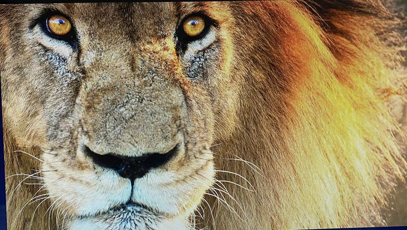 The Lion in a Disrupted World